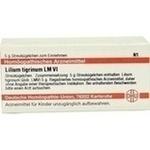 LM LILIUM tigrinum VI Globuli