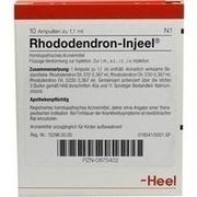 RHODODENDRON INJEEL Ampullen