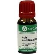 APIS MELLIFICA LM 18 Dilution