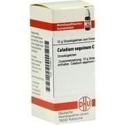 CALADIUM seguinum C 30 Globuli