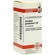 AILANTHUS GLANDULOSA C 30 Globuli