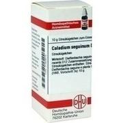CALADIUM seguinum D 12 Globuli