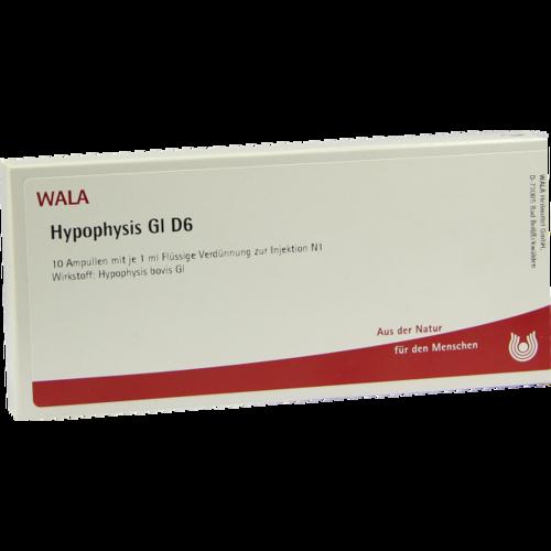 Verpackungsbild(Packshot) von HYPOPHYSIS GL D 6 Ampullen