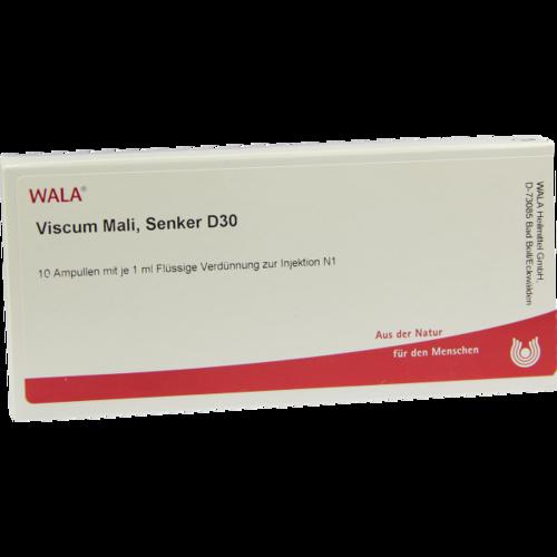 Verpackungsbild(Packshot) von VISCUM MALI Senker D 30 Ampullen